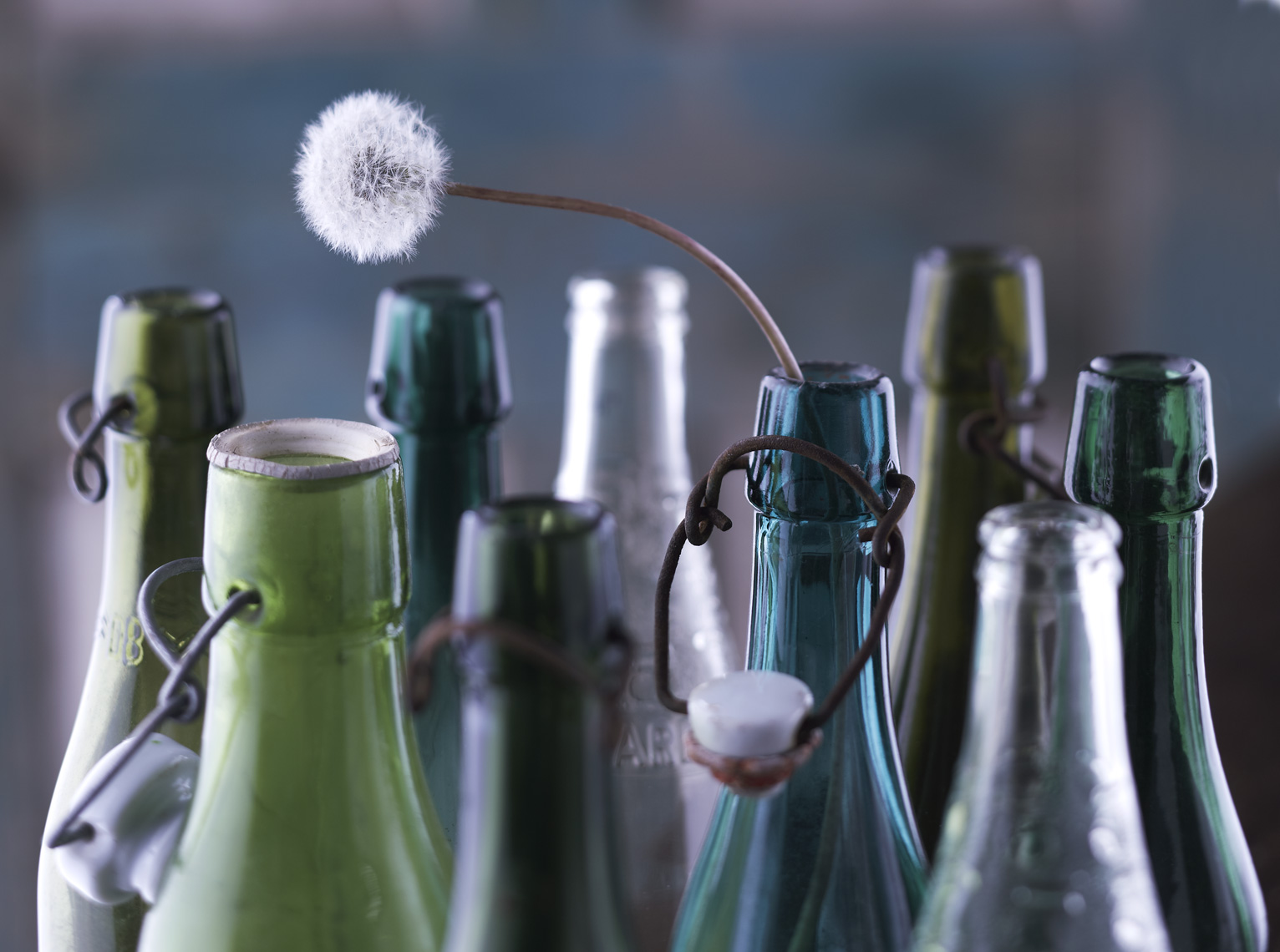 Bottles Dandelion Christopher Nastri